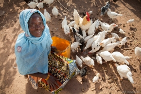 Opportunities offered by smallholder chicken farming inAfrica