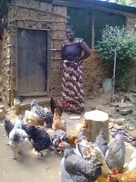 Chicken smallholder farmer in Nigeria (photo credit: ACGG Nigeria)